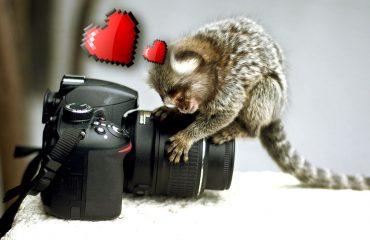 Comprar tu cámara nueva